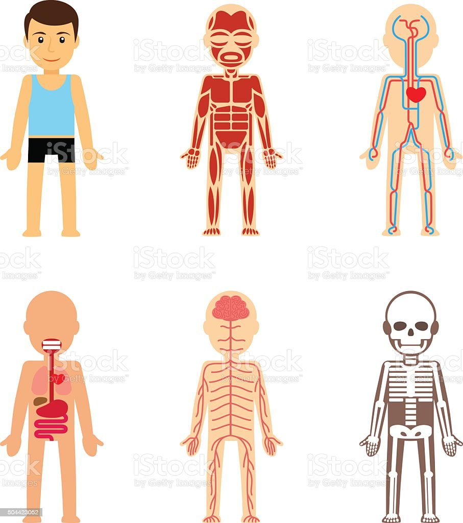 Body anatomy vector vector art illustration