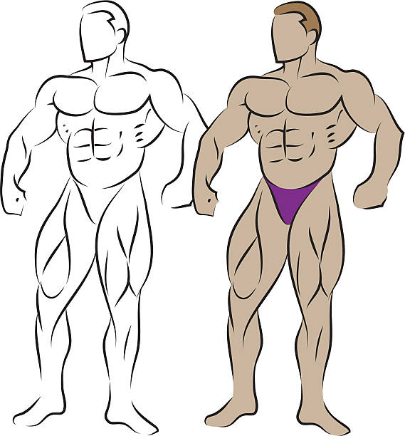Body builder vector art illustration
