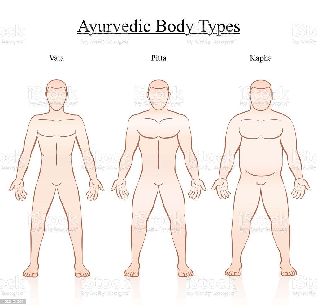 Body Constitution Types Vata Pitta Kapha vector art illustration