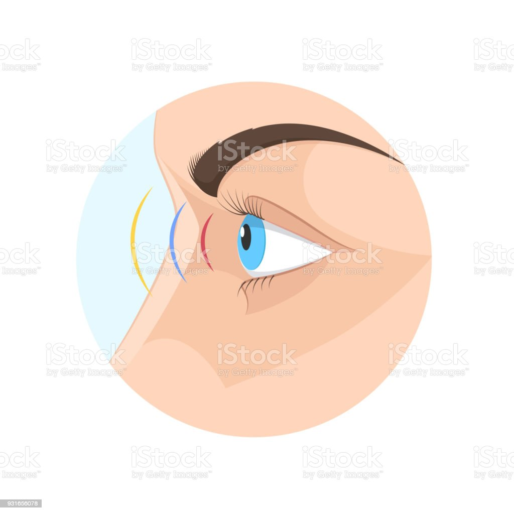 Body human sight, eye. Biology, anatomy man and human organs vector art illustration