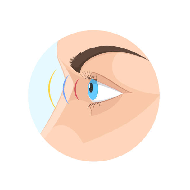 body human sight, eye. biology, anatomy man and human organs - глаз человека stock illustrations