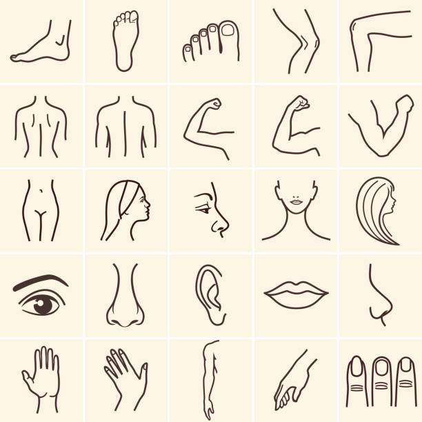 body icons human body parts icons plastic face surgery, medical vector icons. Body sculpting system. female likeness stock illustrations