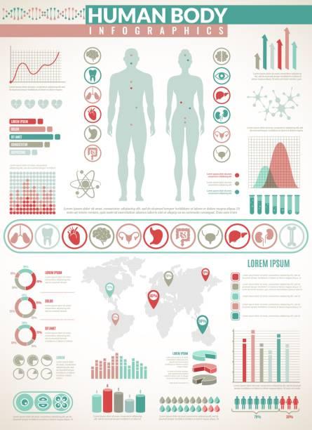 körper-infografiken. human health medical vector anatomy infographic mit diagrammen, diagrammen und graphen, inneren organsymbolen - keks grafiken stock-grafiken, -clipart, -cartoons und -symbole
