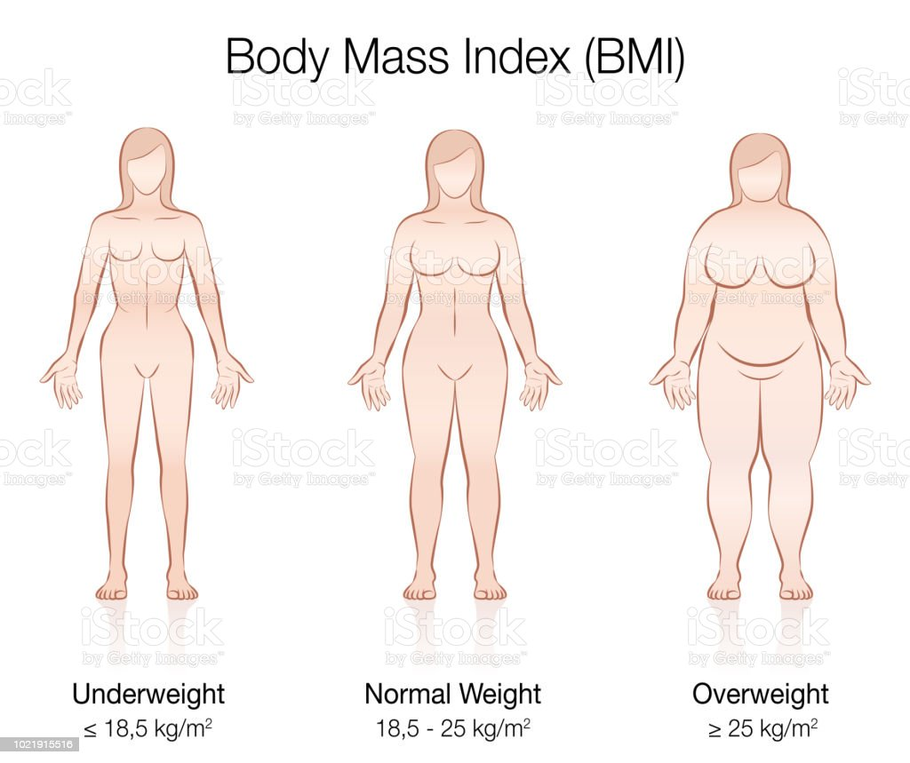 Body Mass Index Bmi Underweight Normal Weight And Overweight Female ...