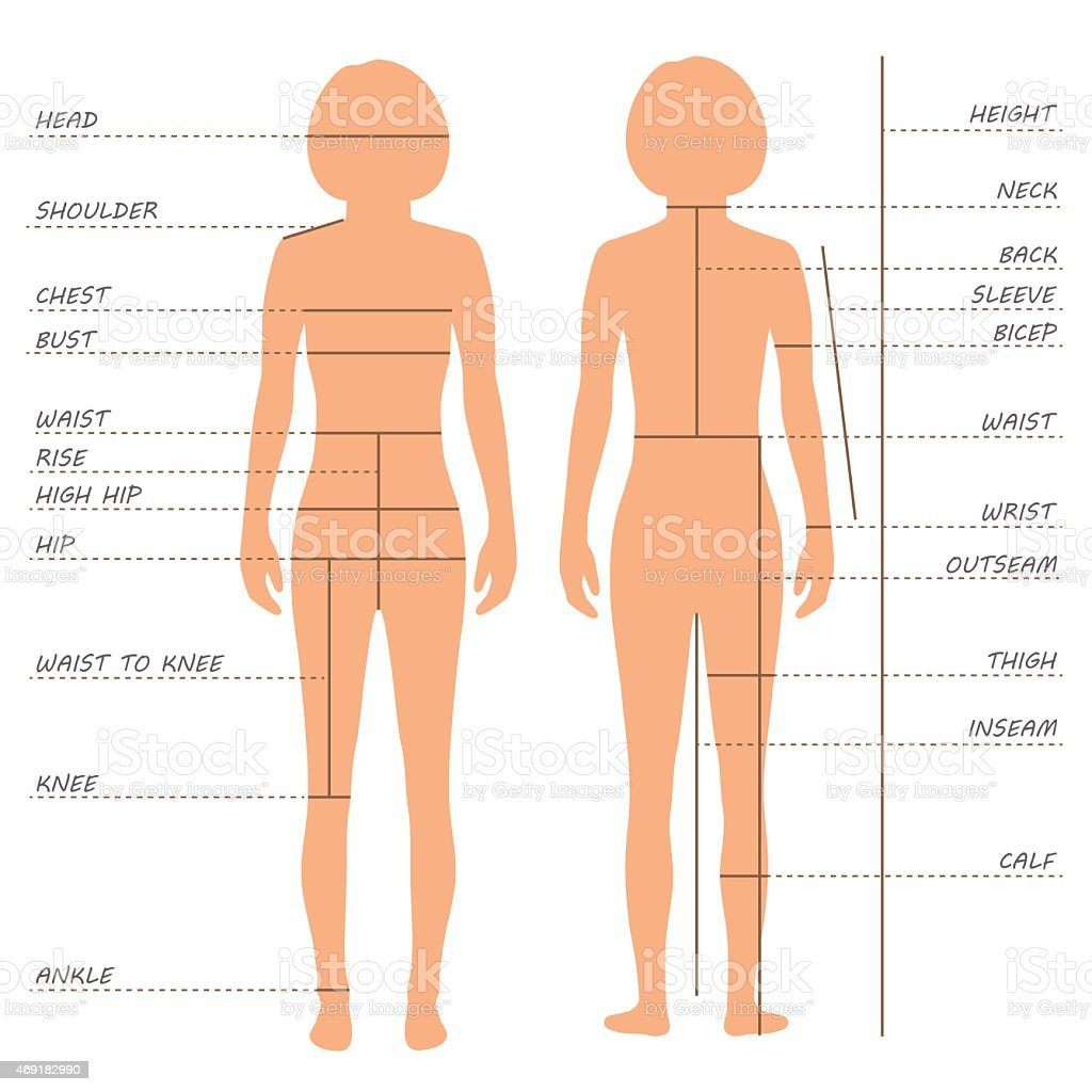 body measurements size chart, vector art illustration