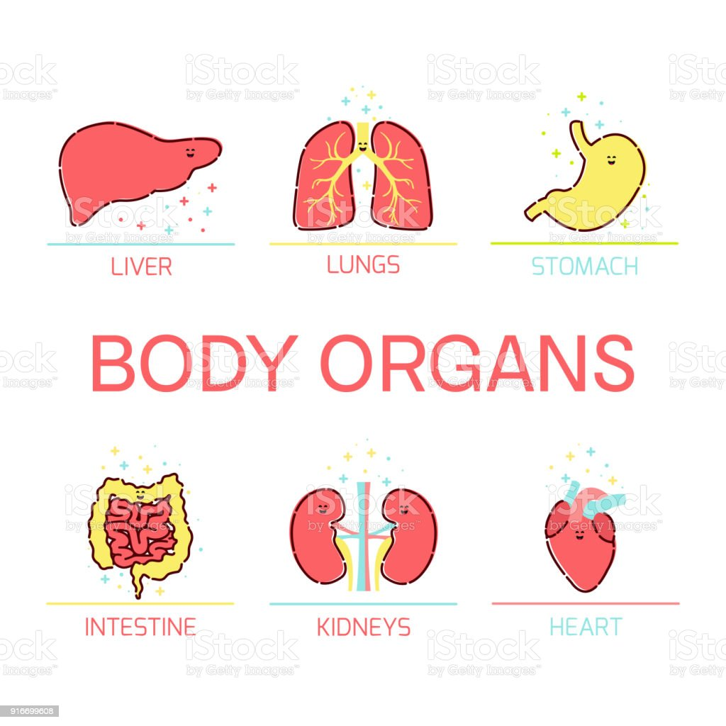 Dessin Corps Humain Organes organes du corps humain dessin animé ensemble – cliparts vectoriels