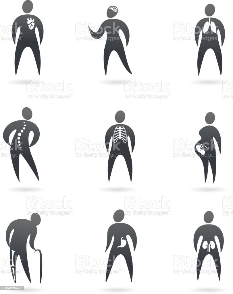 Body organs vector art illustration