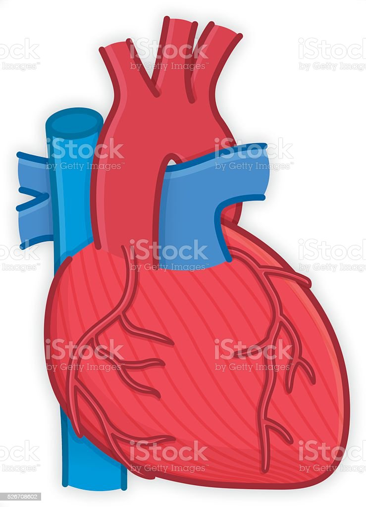 Body parts human heart organ anatomy stock vector art more images body parts human heart organ anatomy royalty free body parts human heart organ anatomy stock ccuart Image collections