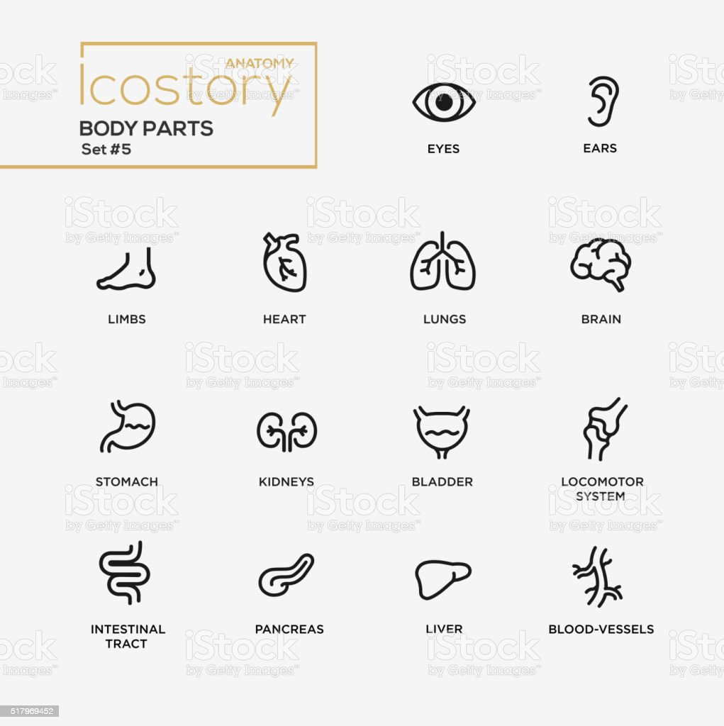 Body parts modern simple thin line design icons, pictograms set royalty-free body parts modern simple thin line design icons pictograms set stock illustration - download image now