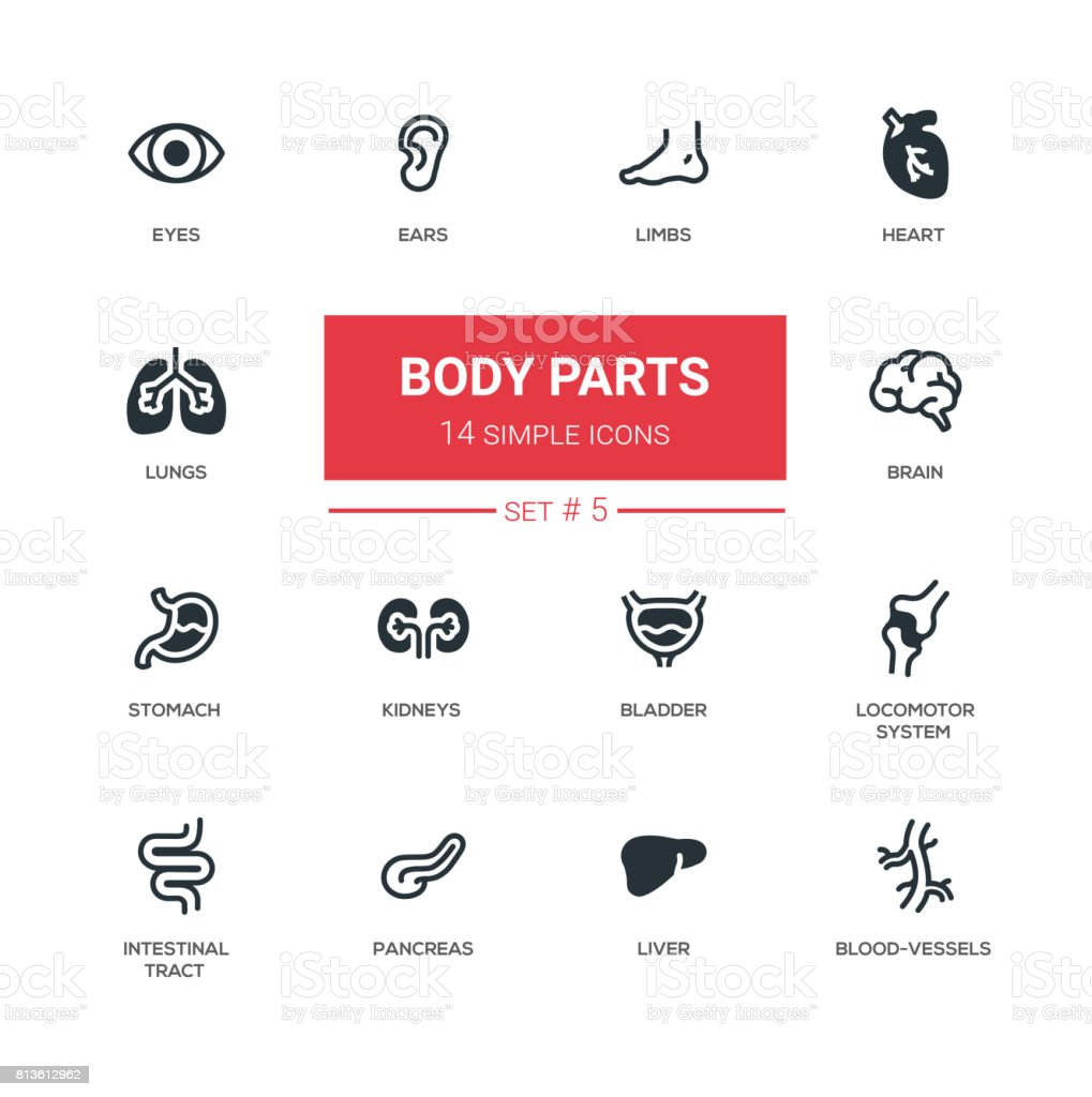 Body parts - Modern simple thin line design icons, pictograms set vector art illustration