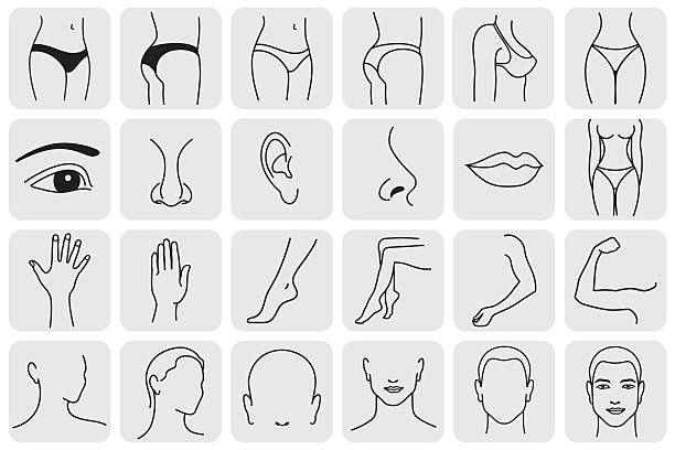 stockillustraties, clipart, cartoons en iconen met body parts - menselijke arm