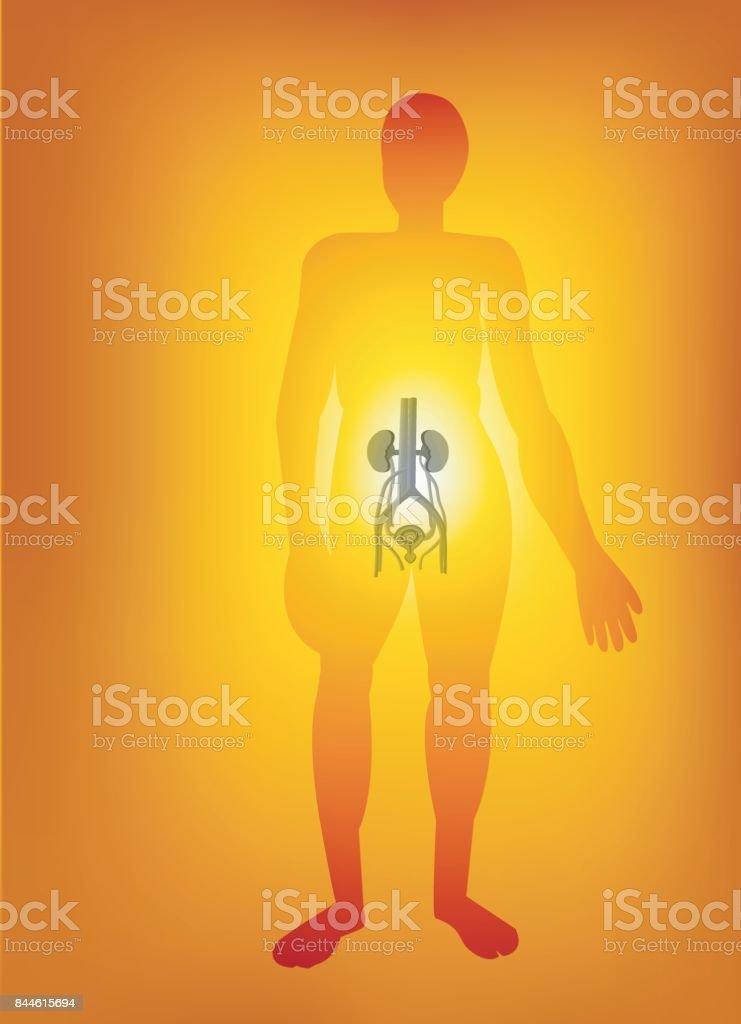 Körperteile Stock Vektor Art und mehr Bilder von Anatomie 844615694 ...