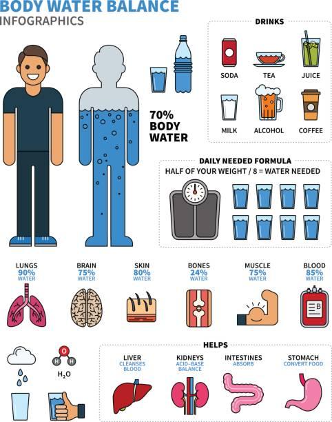 körper wasser infografiken mit menschlichen organen, getränke und betreuungsgeld - zeichensetzung stock-grafiken, -clipart, -cartoons und -symbole