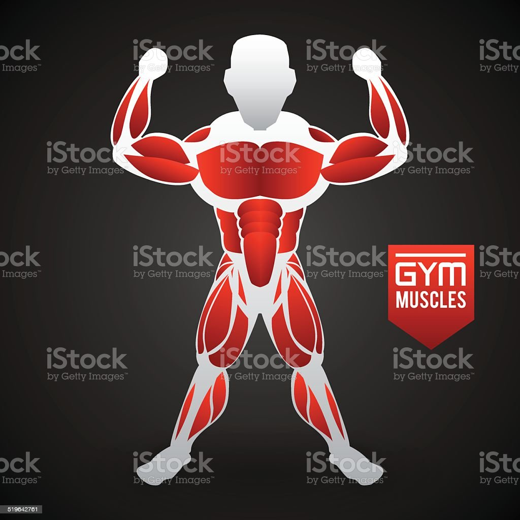 Bodybuilding Design Stock Vector Art & More Images of Anatomy ...