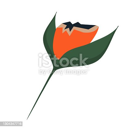 istock Boho flower isolated on white background. Bright red bud in green leaves for illustrations, postcards, posters. Vector graphics. 1304347716
