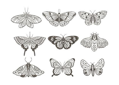 Boho vector butterfly.