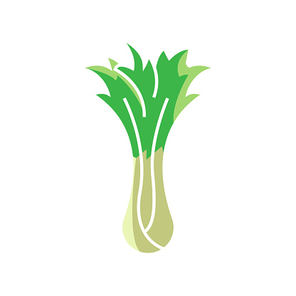 Bok choy icon template vector isolated