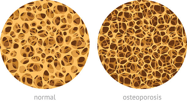 bone spongy structure - animal bone stock illustrations