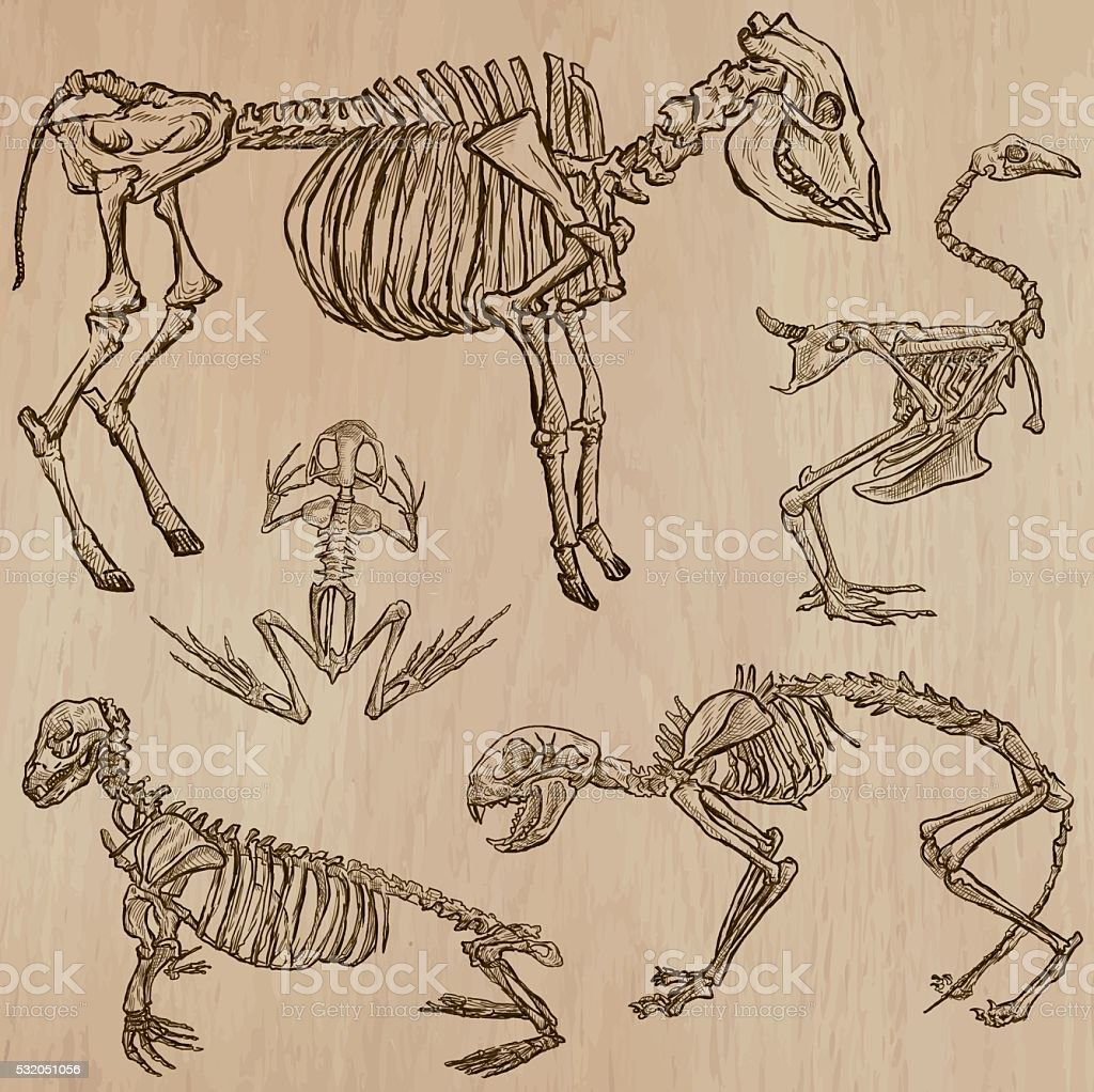 Bones, Skulls, Skeletons - freehands, vector vector art illustration