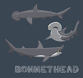 Bonnethead Shark Cartoon Vector Illustration