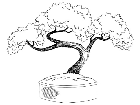 Bonsai tree graphic black white isolated sketch illustration vector
