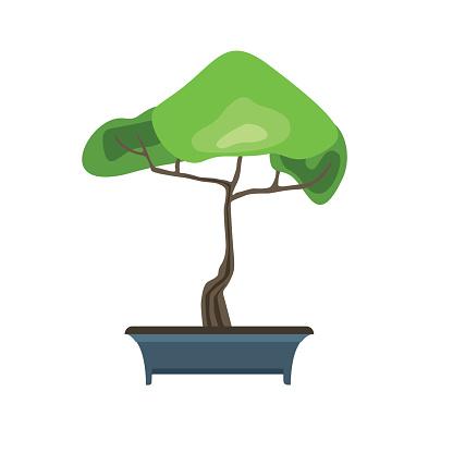 Bonsai Boom In Een Pot Japanse Kunst Van Het Miniatuur Bomen Groeien Vectorillustratie Geisoleerd Op Wit Stockvectorkunst En Meer Beelden Van Beschermd Natuurgebied Istock