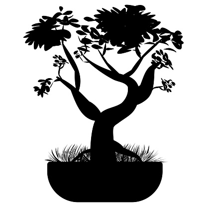 Bonsai tree. Japanese bonsai tree in the pot and with grass around. Plant silhouette icons isolated on white background, Black silhouette of an Asian plant. Vector