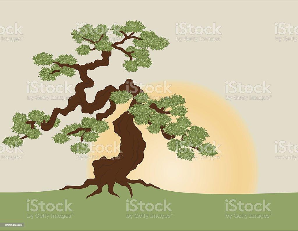 Bonsai - illustrazione arte vettoriale