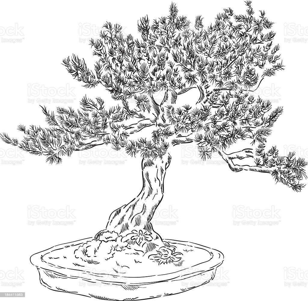 bonsai tree – Vektorgrafik