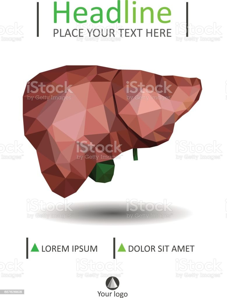 Book cover template with Realistic human liver with bile duct and gallbladder vector art illustration