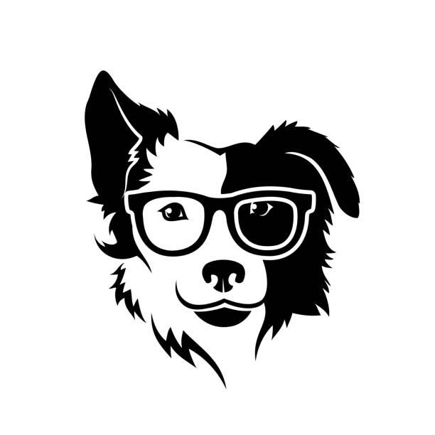 grenze collie hund mit brille-isolierte vektorabbildung - collie stock-grafiken, -clipart, -cartoons und -symbole
