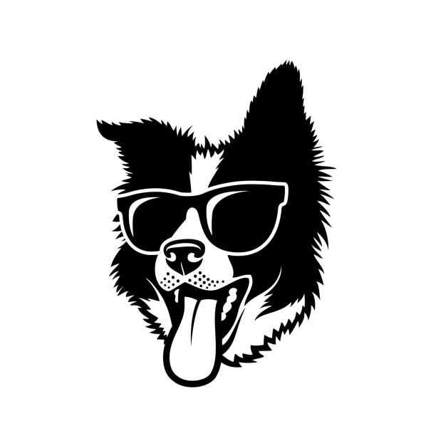 Border Collie dog wearing sunglasses - isolated vector illustration Border Collie dog wearing sunglasses sheepdog stock illustrations