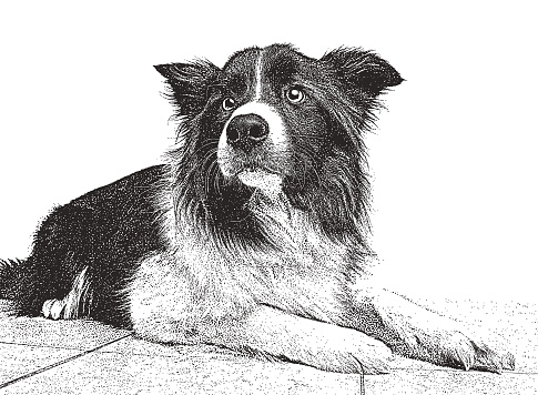Border Collie Mixed-breed dog hoping to be adopted