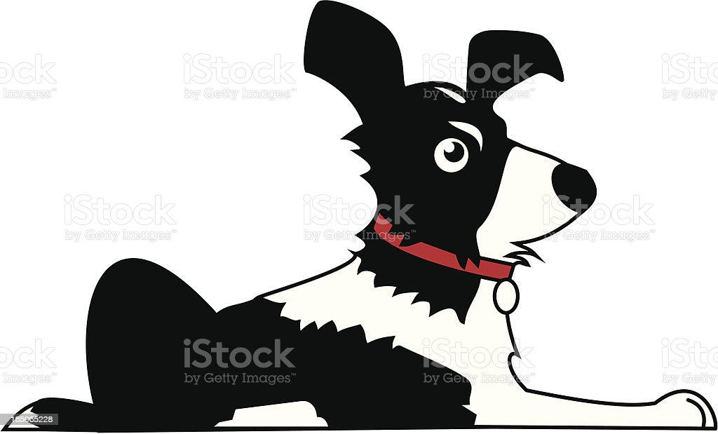royalty free border collie clip art vector images illustrations rh istockphoto com