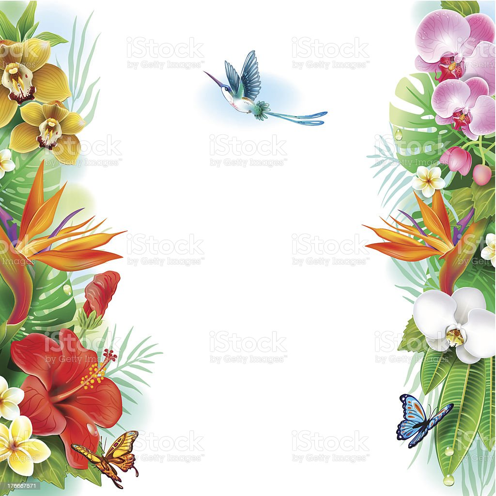 Border from tropical flowers and leaves royalty-free border from tropical flowers and leaves stock vector art & more images of backgrounds