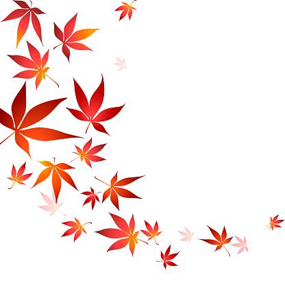 Border of autumn japanese maple tree leaves on white background