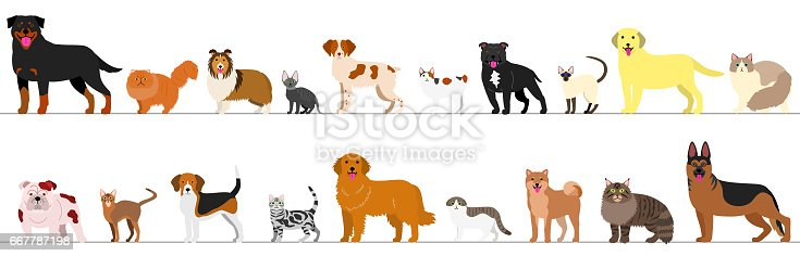 Border of dogs and cats