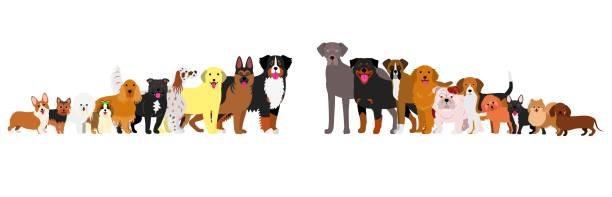 Border of dogs arranged in order of height vector art illustration