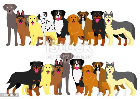Border of various large dogs set.