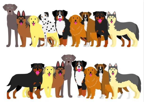 ilustrações de stock, clip art, desenhos animados e ícones de border of large dogs set - fofo descrição física