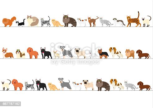 Border of various  small dogs and cats arranged in order of height.