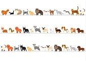 小型犬や猫の高さの順に並べられての境界線