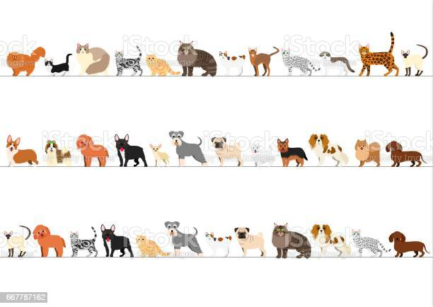 Border of small dogs and cats arranged in order of height vector id667787162?b=1&k=6&m=667787162&s=612x612&h=yyba  lmfhjpzgrgl4bhukp09unu0ae doj7wgvbk3k=