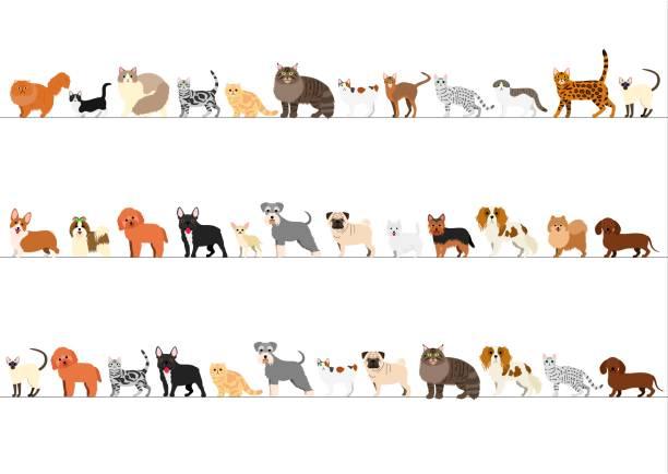 小型犬や猫の高さの順に並べられての境界線 ベクターアートイラスト
