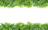 Horizontal tropical border with leaves of monstera, fern and palm tree. Design element for card, advertisement of vacation or invitation.