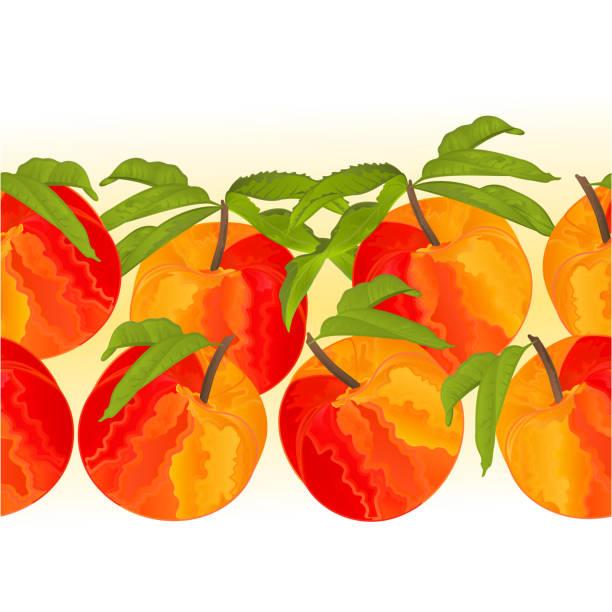grenze nahtlose hintergrund pfirsich mit blätter süße frucht vektor illustration für den einsatz in der innenarchitektur, kunst, geschirr, kleidung, - nektarinenmarmelade stock-grafiken, -clipart, -cartoons und -symbole