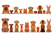 border set of brown dogs