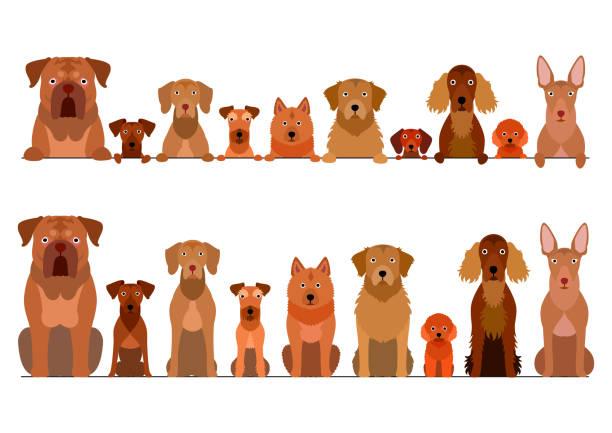 grenzsatz von braunen hunden - vizsla stock-grafiken, -clipart, -cartoons und -symbole