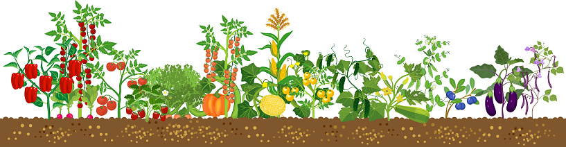 Border with different agriculture plants with ripe fruits and vegetables in all colors of rainbow isolated on white background. Harvest time