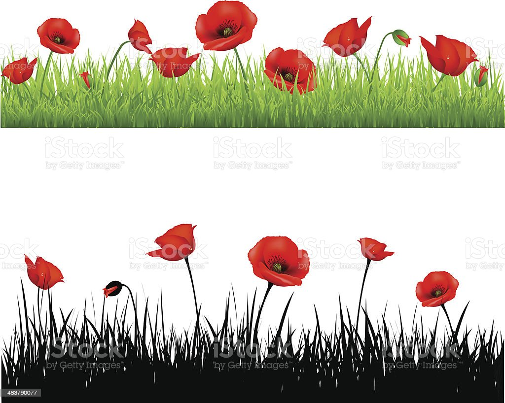 Border With Grass And Poppy vector art illustration